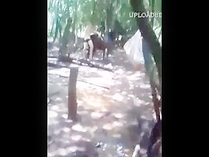 hot boys having fun with donkey Sex Amateur